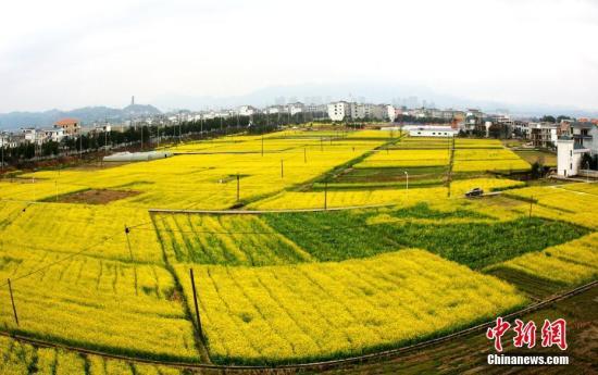 资料图:江西省遂川县枚江镇盛开的油菜花撒满大地。 李建平 摄