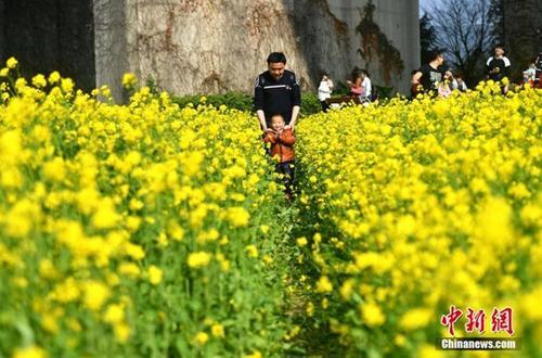 2月19日,福州花海公园近百亩油菜花盛开,吸引许多民众前来赏花、游玩。 <a target='_blank' href='http://www.chinanews.com/'>中新社</a>记者 吕明 摄