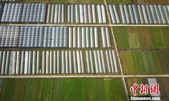 2月28日,江西省新余市渝水区界水乡联盟数千亩有机蔬菜扶贫基地春意盎然。 赵春亮 摄