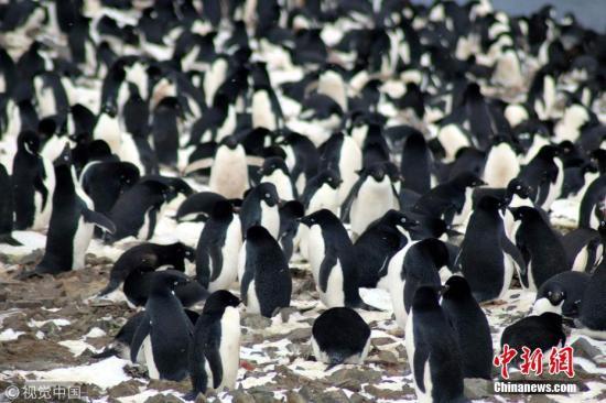 """150万只!科学家在南极发现企鹅""""殖民地""""(图)"""