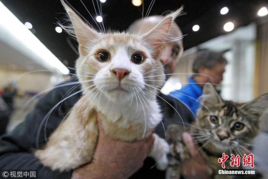 资料图:猫。 图片来源:视觉中国