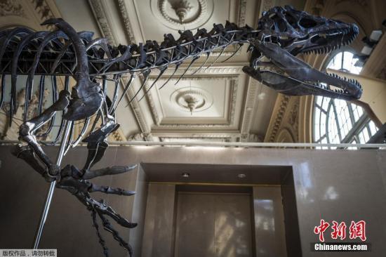 资料图:法国里昂,一副9米长、2.5米高的肉食性恐龙骨骼。