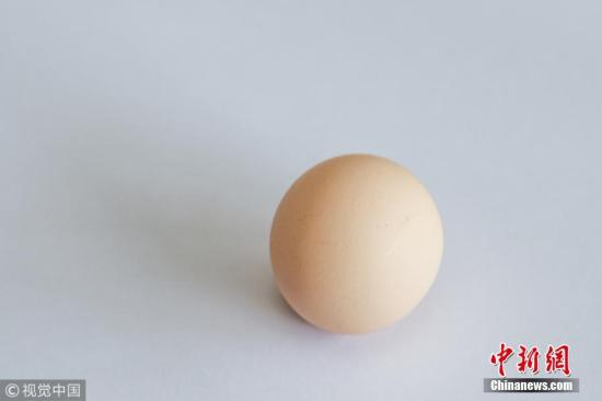"""该鸡蛋直径最宽处约为3.9厘米,最窄处约为3.7厘米,重约25.7克。 吴大伯说,鸡蛋是去年11月在菜场买的,当时没有注意,几天后在家打鸡蛋时,才发现了这只圆形鸡蛋。他把这只鸡蛋,放在冰箱里恒温保存,每当有亲朋好友来家里做客,他都会当""""宝贝""""一样,把这枚鸡蛋拿出来给大家看看,大家都说没见过。 陈中秋 摄 图片来源:视觉必赢"""