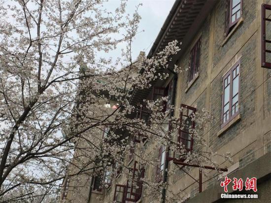 武汉大学赏樱预约限流首