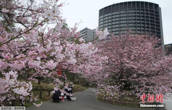 资料图:2018年3月17日下午,日本气象厅进行观测后宣布,东京正式进入樱花季。
