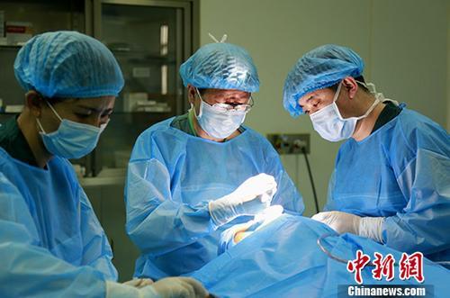 资料图:医生正在进行手术。<a target='_blank' href='http://www.chinanews.com/'>中新社</a>记者 张海雯 摄