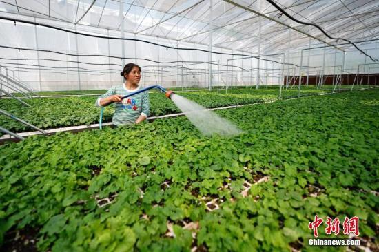 社科院预测今年农业农村经济将积极向上 有利因素增多
