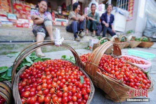 果农在出售樱桃。<a target='_blank' href='http://www.chinanews.com/'>中新社</a>记者 贺俊怡 摄