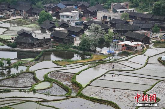 资料图:4月24日,贵州省丹寨县城望苗寨,民众在田间劳作。 中新社记者 贺俊怡 摄