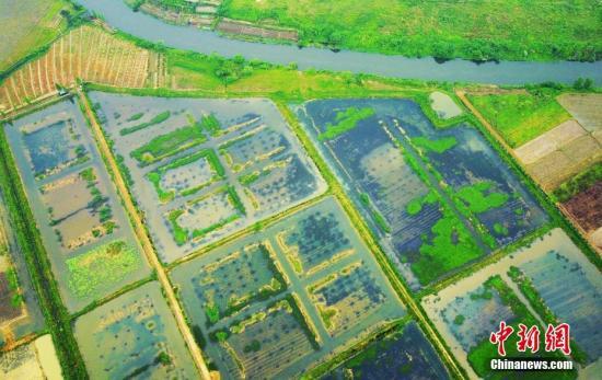 经济形势年中看:农业农村经济高质量发展开局良好