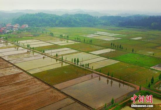 资料图:稻田和养殖基地。 赵春亮 摄