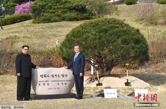 当地时间4月27日,金正恩与文在寅在板门店军事分界线附近共同种下一棵65年树龄的松树,种树的土分别来自朝鲜和韩国。韩朝双方领导人还在植树活动现场合影留念。