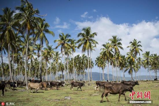 资料图:多米尼加的海边牧场。(图片来源:东方IC 版权作品 请勿转载)