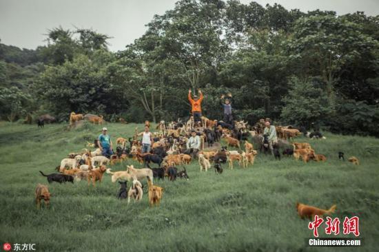 法国夏季抛弃宠物现象严重 国会议员谋求立法阻止