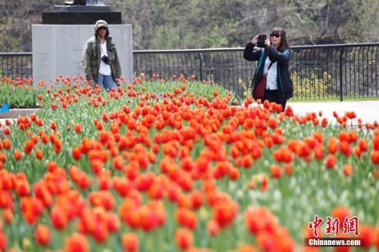 资料图:郁金香。<a target='_blank' href='http://www.chinanews.com/'>中新社</a>记者 余瑞冬 摄