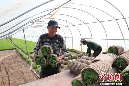 资料图:黑龙江省佳木斯市汤原县农民在大棚里劳作。中新社记者 于琨 摄