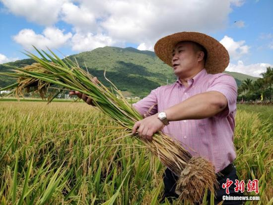 China's super hybrid rice yields achievements in output and saline land improvement