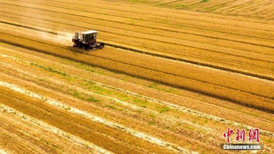 进入六月,山东多地小麦产区开镰麦收,开启夏收农忙模式。山东济南黄河北桑梓店一带近千亩夏粮丰收,田野里一片金黄,到处都是收割机忙碌的身影。图为航拍麦收画面。宋广兴 摄