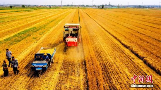 Harvest in Shandong Province.(Photo/China News Service)