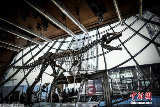 近日,法国巴黎,一具侏罗纪时期的恐龙化石即将拍卖。据悉,这具恐龙骨骼长8.7米,高2.6米,于2013年在美国怀俄明州被发现,化石年代超过了1.5亿年。这只恐龙的品种至今还有待研究和命名,其骨骼标本有望以120万至180万欧元左右(约合人民币898万至1348万元)的价格拍卖成交。