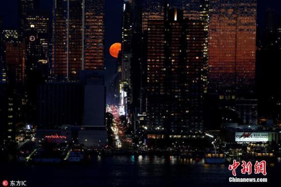 资料图:当地时间2018年6月28日,一轮猩红色的月亮从美国纽约曼哈顿世贸中心大楼后冉冉升起。繁华的城市、硕大的月亮,让人感觉仿佛看到了科幻大片中的场景。草莓月亮是指6月的满月,因为美国原住民认为这是采摘草莓的最佳时机。