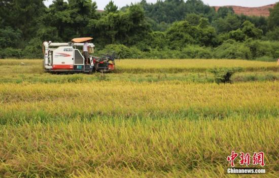 农业农村部提早部署2021年杂交早稻供种工作