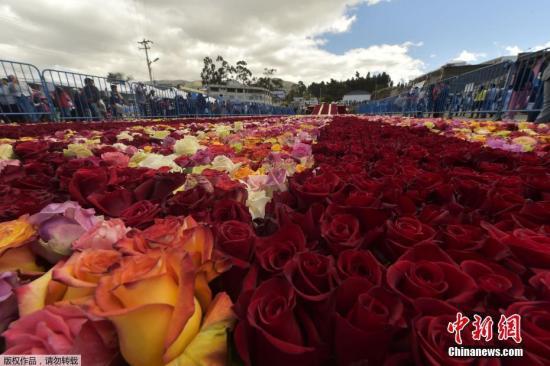 当地时间2018年7月14日,厄瓜多尔Tabacundo,当地一座金字塔形状的土堆上放置了超过5万朵玫瑰,以此来打破吉尼斯世界纪录。