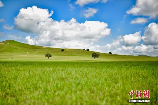 资料图:草原上碧草茵茵。 文/乌娅娜 图/翟璐