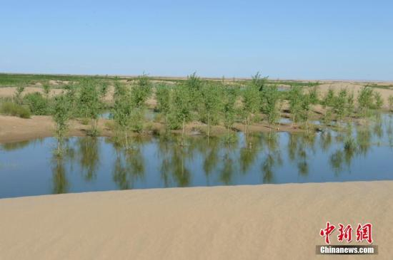 7月24日,引自黄河的凌水让沙漠上充满生机。据悉,中国第七大沙漠--库布齐沙漠所处的杭锦旗境内,每年过境水量310亿立方米,当地一年三分一的时间都是凌汛期。政府因地制宜,2016年投资建成分凌引水渠、生态围堤等设施,自2016年至2018年黄河凌汛期以来,累计分凌5千余万立方米,形成约36平方公里保护湿地的面积,原来为沙漠的地貌逐渐变成绿洲,农牧民开始发展野牛养殖与农家乐旅游业。 /p中新社记者 刘文华 摄