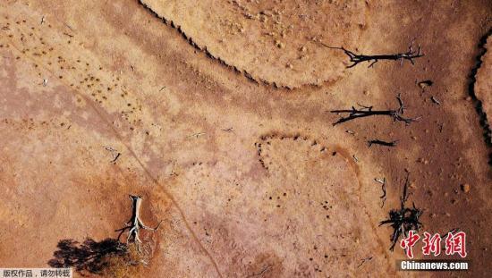澳大旱民众捐款救农民 悉尼一名学童募得10万元(原创)