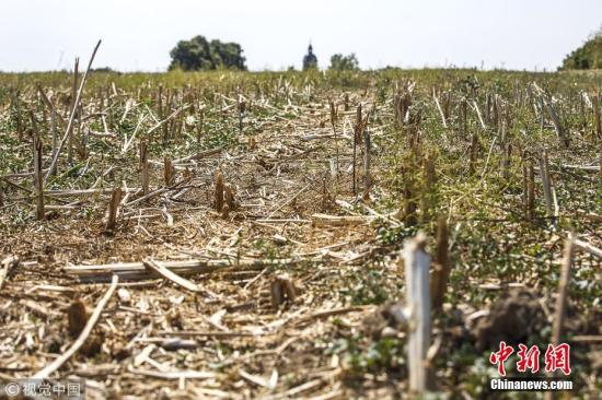 资料图:德国勃兰登堡州的旱地。 图片来源:视觉中国
