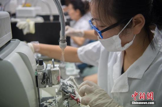 """中国癌症医药的""""缺芯""""之痛:细胞模型依赖进口"""