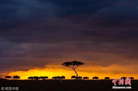 资料图:肯尼亚草原 图片来源:视觉中国