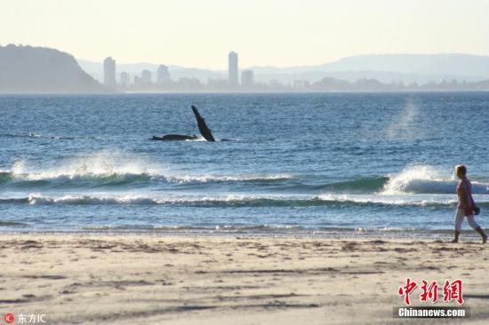 旅游业促进澳黄金海岸发展 提供4.2万个就业岗位