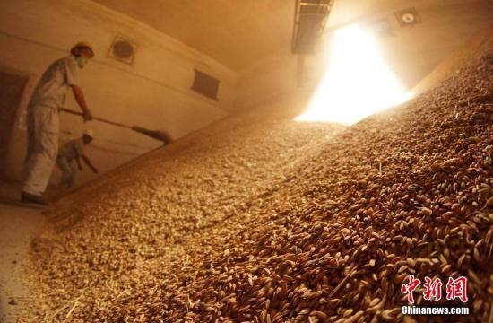资料图:金黄色的稻谷堆满粮仓。王昊阳 摄