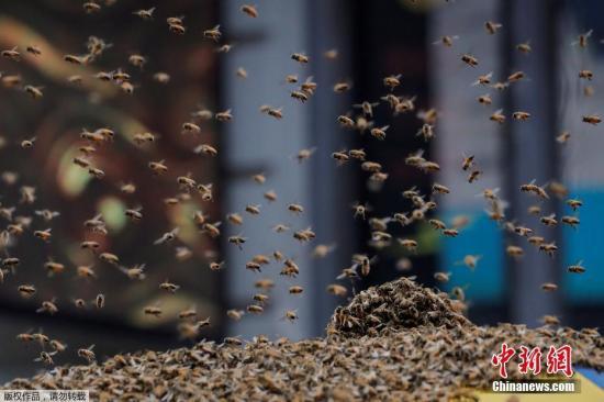 材料图R∩壤阅蜜蜂。