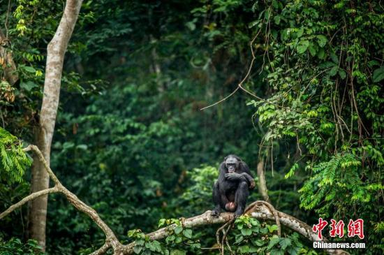 资料图:热带雨林。 图片来源:图虫创意