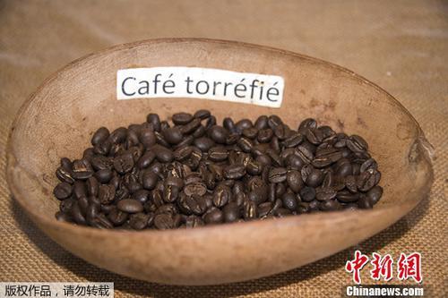 资料图片:非洲农业咖啡