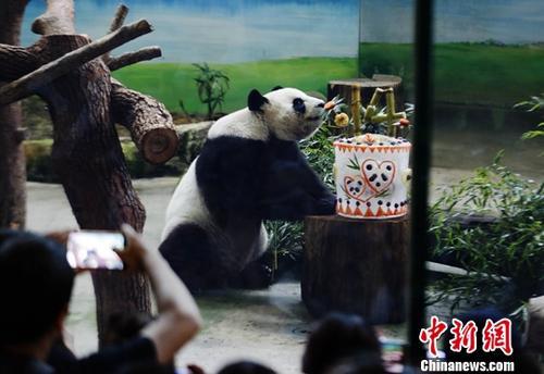 """8月30日,大熊猫团团、圆圆在位于台北木栅的市立动物园迎来14岁""""生日宴""""。当天动物园为两只熊猫准备的""""生日蛋糕""""款式相同,皆由大熊猫喜爱的冰块做成,内层的镂空设计用于放置水果蔬菜,上部用甘蔗拼成阿拉伯数字""""14""""的图案代表""""寿星""""年纪。图中圆圆的蛋糕呈圆柱体,表面画着两只爱心包裹的熊猫头像,代表着圆圆、圆仔""""母子""""。<a target='_blank' href='http://www.chinanews.com/'>中新社</a>记者 杨程晨 摄"""