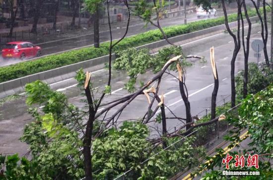 """資料圖:強臺風""""山竹""""致香港灣仔告士打道旁的多棵開道樹被刮斷。<a target='_blank' href='http://www.bagdealsnow.com/'>中新社</a>記者 張煒 攝"""