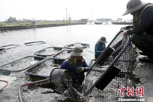 台渔民:两岸一家亲 鱼销大陆提振渔民收
