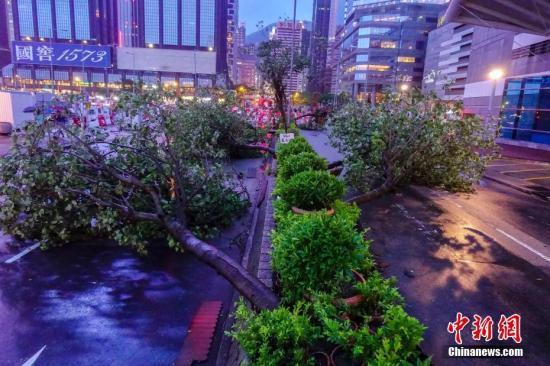 """9月16日傍晚,强台风""""山竹""""袭击下的香港到处是倒塌的树木。通往金紫荆广场的绿化带上多棵大树被连根拔起。 <a target='_blank' href='http://www.chinanews.com/'>中新社</a>记者 张炜 摄"""