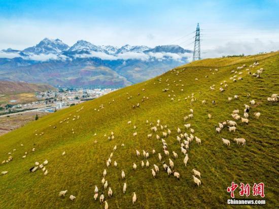 """近日,航拍摄影爱好者在青海省海北藏族自治州祁连县进行拍摄,用航拍镜头记录了中国祁连山下的最美草原。祁连县位于青海省的东北部,北邻古丝绸之路的首要通道甘肃河西走廊,故有青海""""北大门""""之称。全县国土面积1.4万平方公里,共有草原1764万亩,是青海省畜牧业基地。进入金秋时节的祁连草原,阳光艳丽而温暖。祁连地区其多样性的地理地貌构成了具有草原、雪山、林海、峡谷、冰川等独特的原生态景观;悠久的历史、多样的民族宗教文化构成了多姿多彩的人文景观,使祁连县旅游资源具有原始性、神秘性、多样性、生态性兼容的特点,有着""""天境祁连""""、""""东方瑞士""""等美誉。宋新华 摄"""