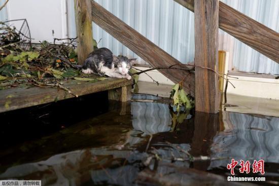 """北卡州长库珀(Roy Cooper)17日早晨表示,""""北卡的危机仍在继续,灾难性的洪水和龙卷风依然在夺走人们的生命,损坏财产。在北卡的大多数地区,灾情仍十分危急。"""""""
