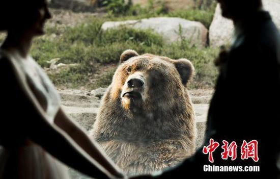 材料图:灰熊。 图片滥觞:西方IC 版权做品 请勿转载