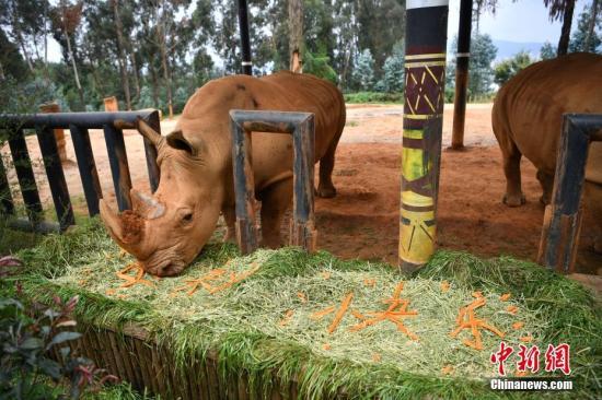 资料图:犀牛。中新社记者 刘冉阳 摄