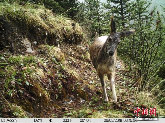 Facial recognition technology becomes popular on animals in addition to humans
