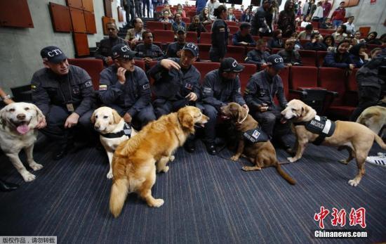 当地时间2018年9月21日,哥伦比亚波哥大,哥伦比亚14只嗅探犬的退役仪式举行,助理司法部长为它们授予了金质奖章和退役证书。 这14只嗅探犬已兢兢业业工作10多年,它们负责嗅探爆炸物和可卡因等毒品,并参与搜救工作。