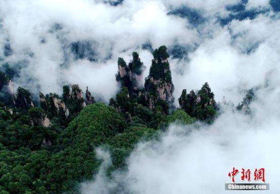 轻盈的云雾弥漫在峰林之巅。 吴勇兵 摄