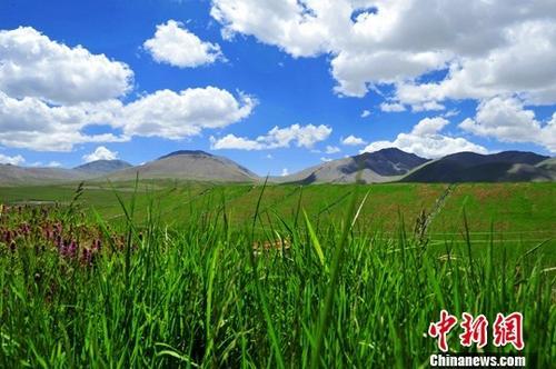 原料图:青海祁连山区生态环境治。中新社记者 赵晓东 摄